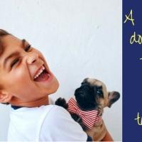 Sua criança te pede um animalzinho de estimação?